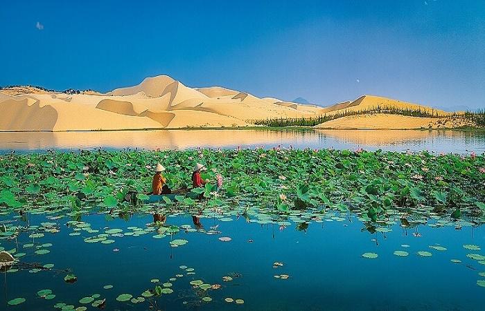 Bàu Sen Bàu Trắng - Tiểu Sa mạc đẹp số 1 Mũi Né