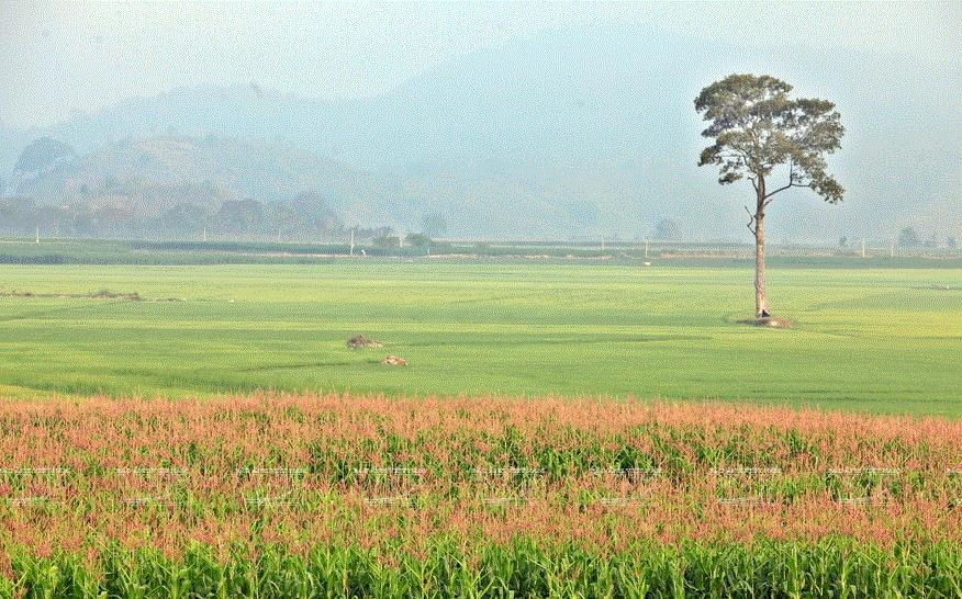 Buôn cổ M'liêng - nơi lưu giữ nét văn hóa dân tộc M'nông | Điểm đến | Vietnam+ (VietnamPlus)