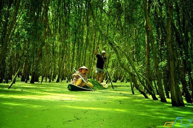 Đi du lịch rừng tràm Trà Sư mùa nào đẹp?