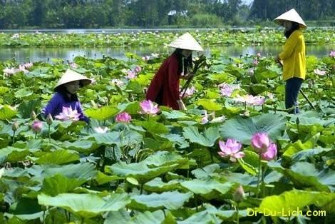 Các địa điểm du lịch nổi tiếng ở Cao Lãnh – Đồng Tháp | Đi Du Lịch Online – Chuyên trang tổng hợp, chia sẻ thông tin, kinh nghiệm du lịch