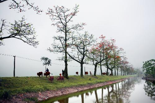 nhung-diem-chup-hoa-gao-quang-ha-noi-02.jpg